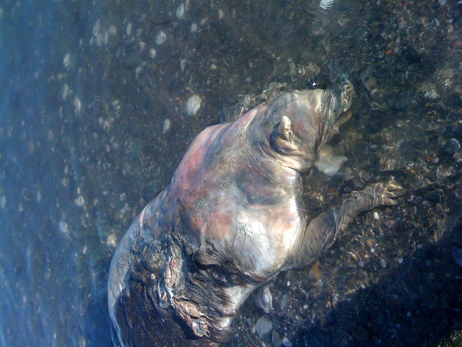 海岸に打ち上げられた 謎の生物 TOP5